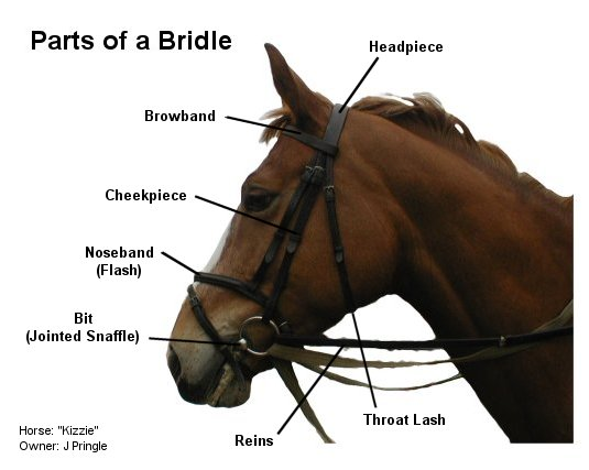 how to put together camp draught bit on bridle