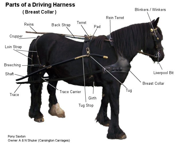 diagram of parts a horse harness